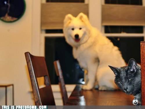 Animal Bomb,animals,Cats,dogs,evil plot,what happens next