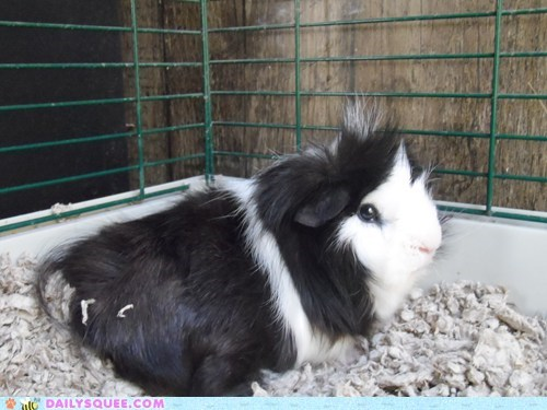 Reader Squee: Well Groomed