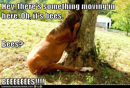Hey, there's something moving in here. Oh, it's bees. Bees? BEEEEEEES!!!!