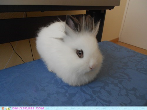Reader Squee: Cottonball