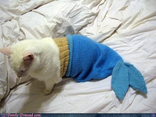 cat,Hall of Fame,kitteh,mermaid,pet,pet clothing
