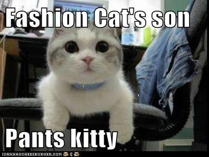 Fashion Cat's son  Pants kitty
