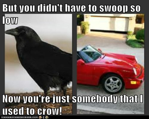 But you didn't have to swoop so low  Now you're just somebody that I used to crow!
