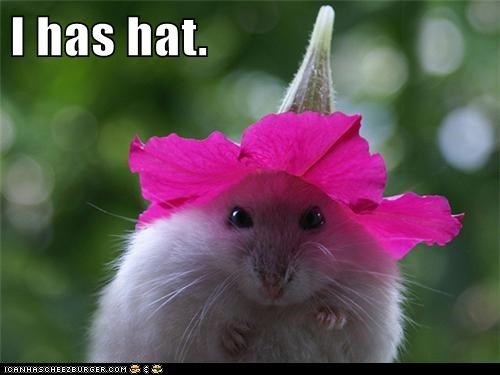 best of the week,cute,Flower,flowers,Hall of Fame,hamsters,hat,hats,i has,mouse