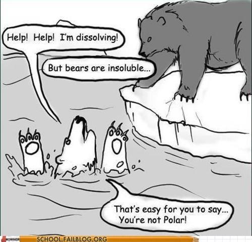 bears,insoluble,polar,polar bears,youre-right