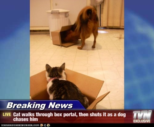 Breaking News - Cat walks through box portal, then shuts it as a dog chases him