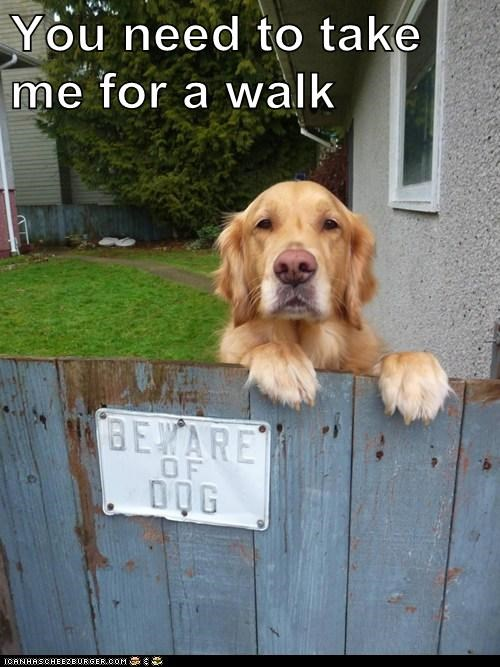 You need to take me for a walk