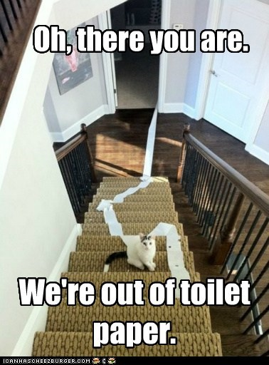 annoy,annoying,bathroom,Cats,destruction,lolcats,mess,stairs,toilet,toilet paper,TP