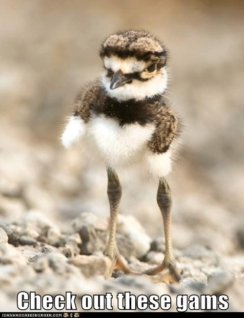 bird,birds,chick,gams,legs,long legs,sexy
