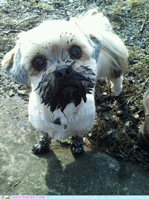 dirty,dogs,kisses,mud,muddy,pet,reader squee