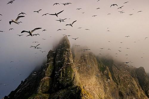 birds,cliff,mountain,scotland,sea