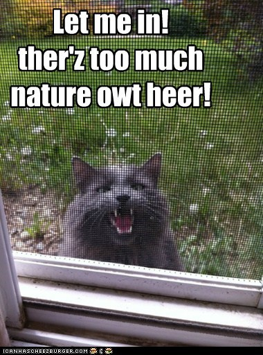 Cats,do not want,door,green,gross,inside,let me in,lolcats,nature,outside,screen dor,trees,uncomfortable