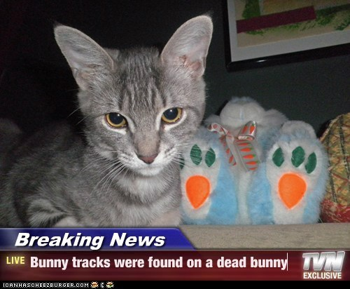 Breaking News - Bunny tracks were found on a dead bunny