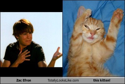 Zac Efron Totally Looks Like this kitten!
