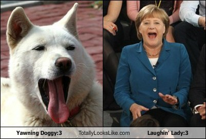 Yawning Doggy:3 Totally Looks Like Laughin' Lady:3