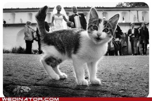 bride,Cats,funny wedding photos,groom,Hall of Fame,photobomb