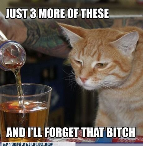 Crunk Critters: Kitteh Traiz to Forget Teh Painz