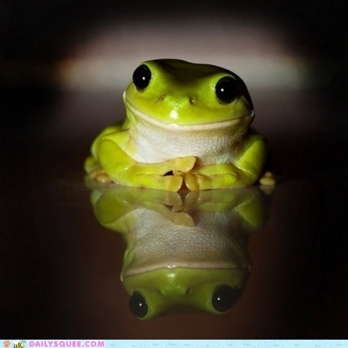 Daily Squee: Friendly Frog