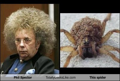 Phil Spector Totally Looks Like This Spider