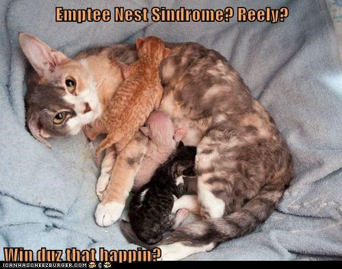 Emptee Nest Sindrome? Reely?  Win duz that happin?