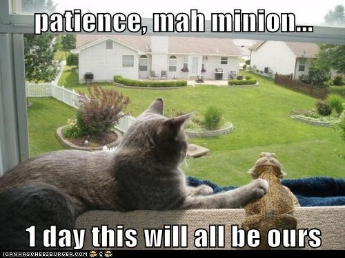 patience, mah minion...