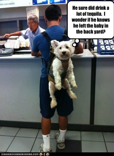 baby,dogs,hangovers,harness,post office,white terrier