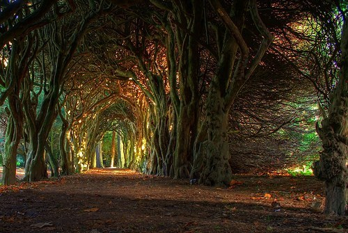 Forest,Hall of Fame,Ireland,tree,tunnel