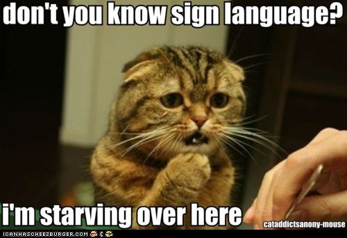 Cats,hungry,lolcats,mouth open,sign language,starving