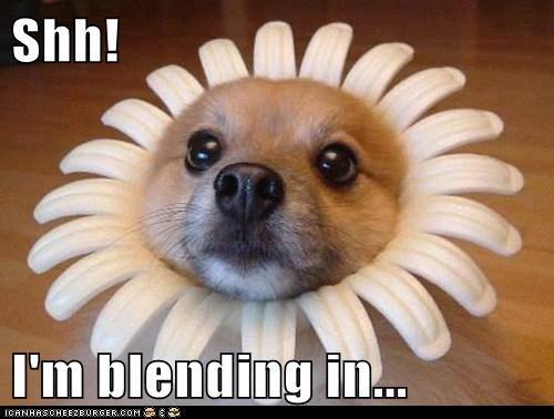 Shh!  I'm blending in...