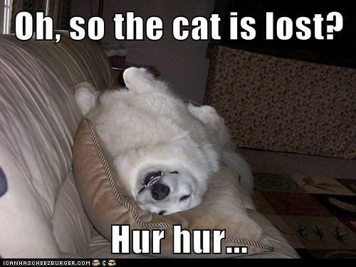 Oh, so the cat is lost?  Hur hur...
