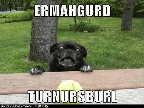 classic,dogs,Ermahgerd,goggie,tennis ball