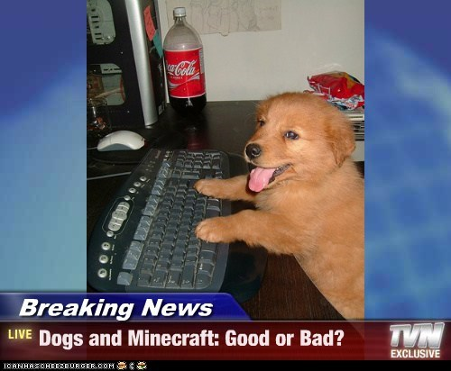 Breaking News - Dogs and Minecraft: Good or Bad?