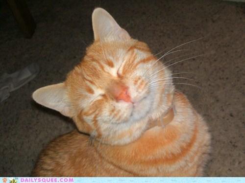 cat,it-wasnt-me,pet,reader squee,smile,suspicious