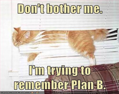 blinds,Cats,destruction,escape,halp,lolcats,plan,plan b,stuck,trapped