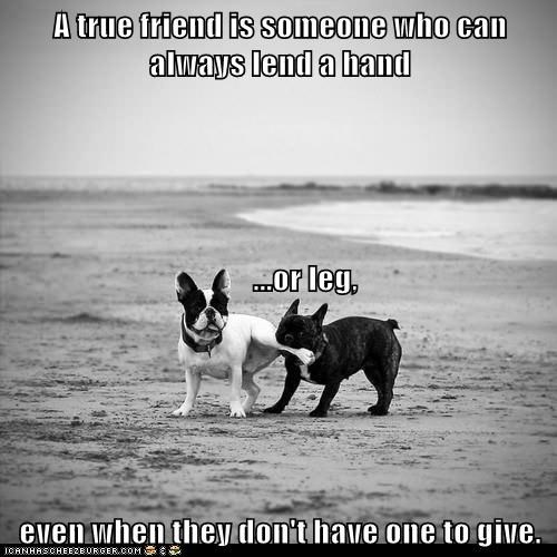 A true friend is someone who can always lend a hand         ...or leg,  even when they don't have one to give.