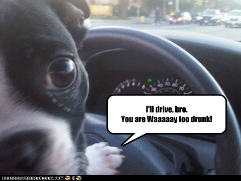 So Drunk Your Dog Is Talking