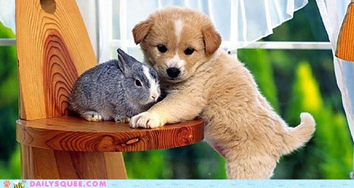 Interspecies Love: Can't Get Any Cuter