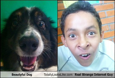 Beautyful Dog Totally Looks Like Real Strange Internet Guy