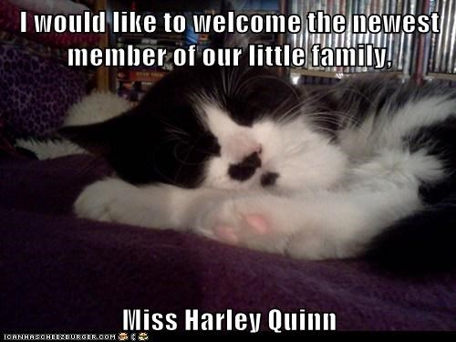 I would like to welcome the newest member of our little family,  Miss Harley Quinn