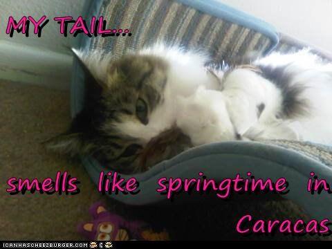 MY TAIL...  smells  like  springtime  in      Caracas