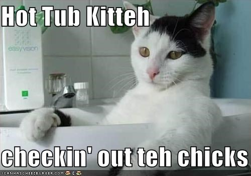 Hot Tub Kitteh  checkin' out teh chicks