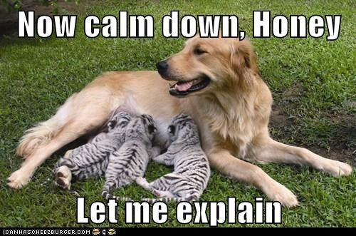 calm down,confusion,dogs,let me explain,tiger cubs