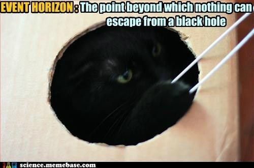 Black Holes Are Basement Kitty's Domain