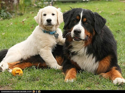 Around the Interwebs: 10 Dogs and Their Best Friends