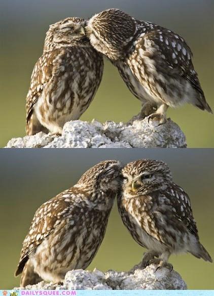 Owly Secrets