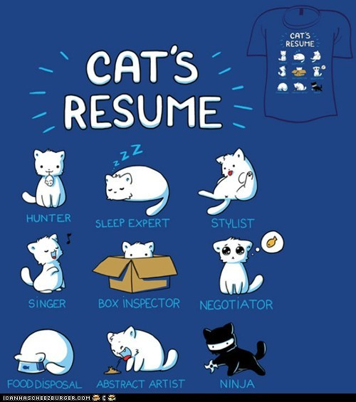 Cool Kitteh Shirt: Cat's Resume