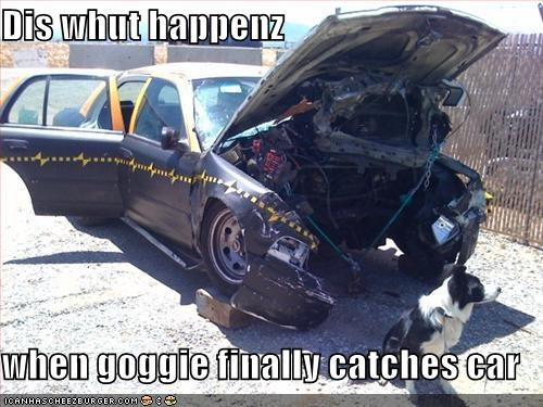 Dis whut happenz  when goggie finally catches car