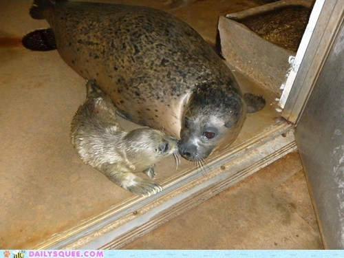 Mommy & Baby Harbor Seals