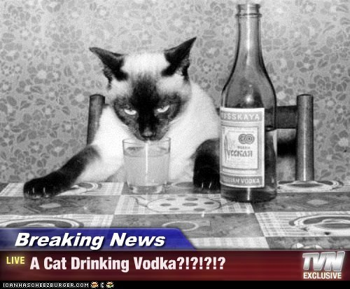 Breaking News - A Cat Drinking Vodka?!?!?!?