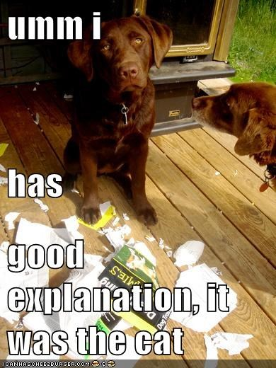 umm i  has  good explanation, it was the cat